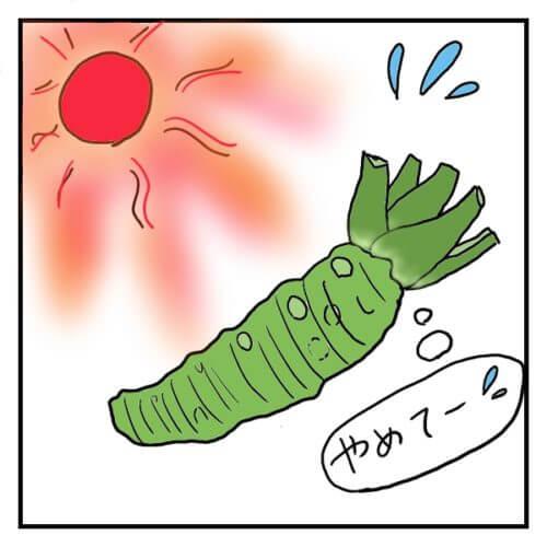 山葵が暑い太陽に苦しんでいる絵