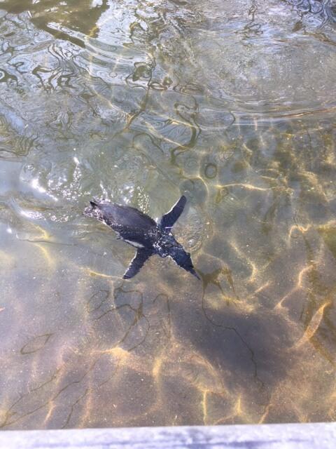 ブロンクス動物園の泳いでるペンギン