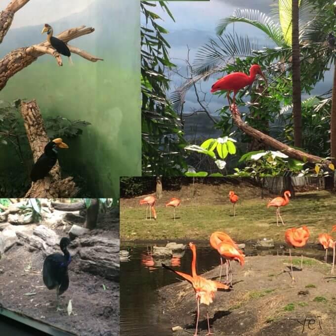 ブロンクス動物園にいた鳥たち