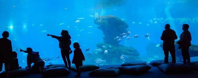 水族館を楽しむ人達