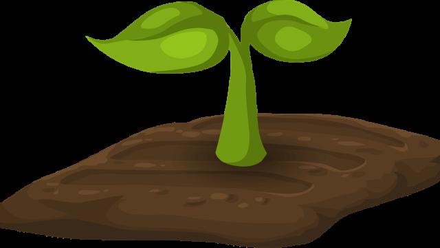 双葉の新芽が土から生えている絵